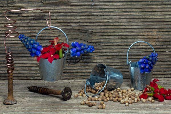 Colectarea si pastrarea semintelor
